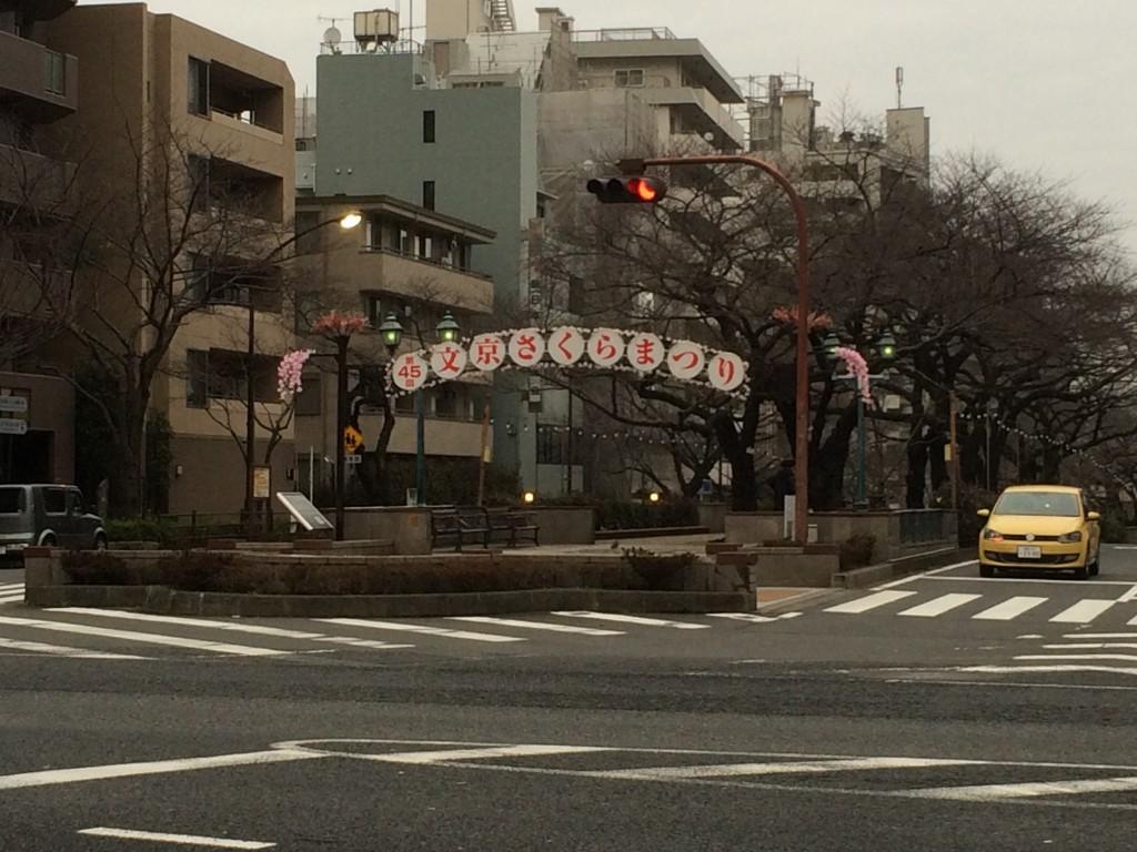 文京区 桜祭り
